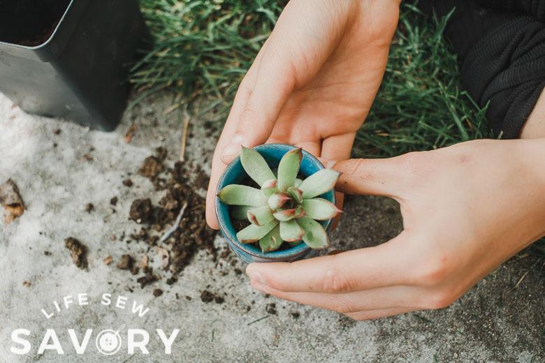 put plant in pot